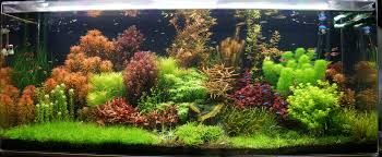 Take a look at this awesome aquascape and inspired You can