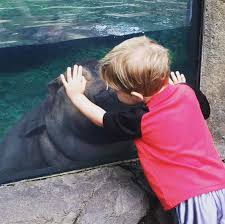 Cincinnati Zoo Halloween by Fiona The Hippo Cincinnati Zoo Instagram Archives U2013 April The