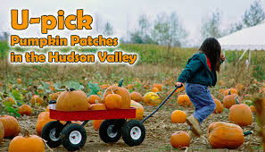Columbus Ohio Pumpkin Patches by Top Pumpkin Patches In The Hudson Valley