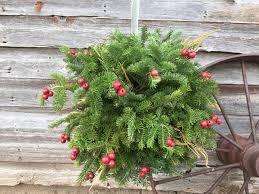 Christmas Tree Types by Tree Types Mr Christmastree Com