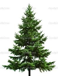 What Kind Of Trees Are Christmas Trees by Different Types Of Christmas Trees Christmas Ideas