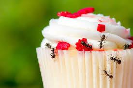ameisen bekämpfen effektive ameisenabwehr so geht s