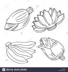Nouveau Dessin De Banane