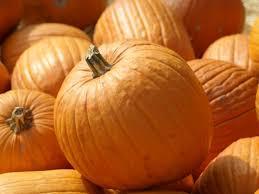 Pumpkin Picking Ct Best by Patch Picks Pumpkin Patches Windsor Locks Ct Patch