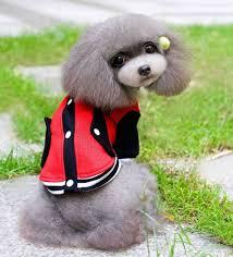 100 cotton baseball coat sweater jumper hoodie small boy dog