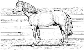 Popular Realistic Horse Coloring Pages