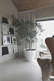 beautiful living olive tree room the inbeautiful olive