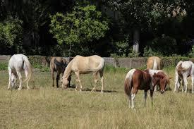 chambre d hote equitation a cheval maisons d hôtes de caractère maisondhote com