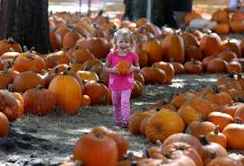 Pumpkin Patch Church Tallahassee by Here U0027s Where To Buy A Pumpkin In Tampa Bay