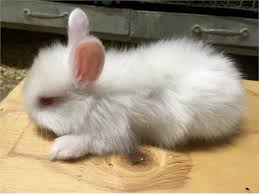 Can Bunny Rabbits Eat Pumpkin Seeds by Buy A Rabbit In California Rabbits For Sale Rabbits Life