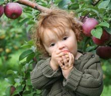 Pumpkin Picking Places In South Jersey by Best Apple Picking Farms In New Jersey With Kids Mommypoppins
