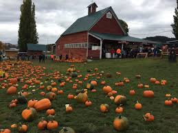 Snohomish County Pumpkin Patches Corn Mazes by A Narrow Gate Two Pumpkin Patches Old Home Vs New Home