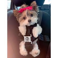 Dog Treats Toys Food Supplies Gifts Free Shipping At PupJoycom