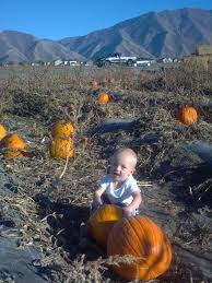 Jakers Pumpkin Patch by The Ogletree Family