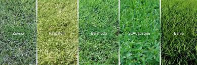 Carpet Grass Florida by Sports Turf Specialist West Palm Beach Florida Environmental