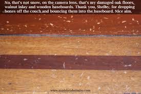 do dogs and wood floors mix labrador retriever art