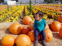 Clayton County Pumpkin Patch by Bay Area Pumpkin Patches 2016