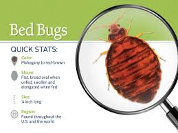 Where Do Bed Bugs e From Identify Bed Bugs Info