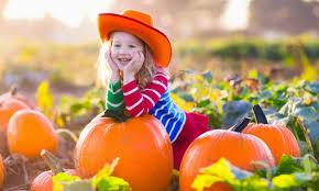 Pumpkin Patch Irvine University by Halloween Activities In Irvine