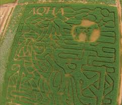 Milwaukee Pumpkin Patch Lubbock by 10 Of The Best Corn Mazes To Do This Fall In Texas