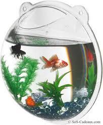 poisson d aquarium archives page 7 of 14 poisson naturel