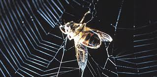 la toile électrique de l araignée sciencesetavenir fr