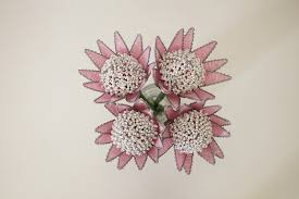 100 Flannel Flower Glass King Protea