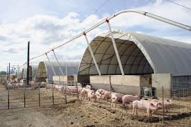 Spotlight On Pure County Pork And Their Healthy Hog Housing ... Viewing A Thread Hoop Building Our Journey To Build Our Pole Barn House Youtube Best 25 Pole Insulation Ideas On Pinterest Metal Barns Wood Sheds The Home Depot Mueller Metal Buildings Buildings Prices Pennsylvania Mini Barn Storage Shed And Garage Hoopquonset Hut Type Building For Temporary Living Structure Prices Used Fabric Structures For Sale Great Deals Call 800 277 8677 Cstruction