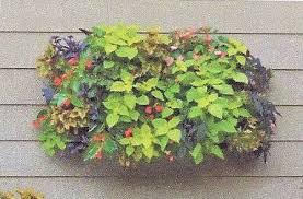Living Wall Planter by Pamela Crawford