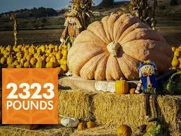 Worlds Heaviest Pumpkin Pie by How A Pumpkin Farmer Changed My Perspective On Life And Business