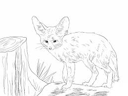 Image Of Fennec Fox Coloring Pages