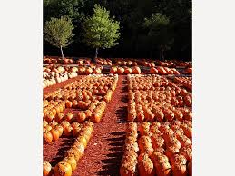 Pumpkin Farms In South Georgia by Agriculture In Georgia Overview New Georgia Encyclopedia