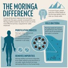 Cloudy Water From Sink by Did You Know Moringa Oleifera Has Been Zija International