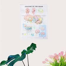 60x80 Cm Anatomía Del Cerebro Cartel De Tela De Seda Anatómica Carta Del Cuerpo Humano Midcal Decoración Educativa