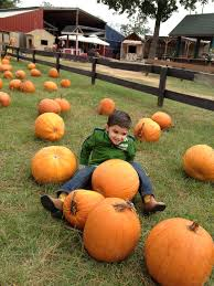 Pumpkin Patches Near Temple Texas by 139 Best Children U0027s Vacation Images On Pinterest 7 Acre Wood