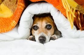 hund im bett hunde tipps und infos