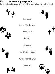 Animal Tracks Match Up