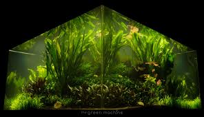 Nature's Chaos Transformed Into A Jungle Aquascape By James ... Aquascaping Nature Aquariums Of Zoobotanica 2013 Youtube Aquascape The Month November 2009 Riverbank Aquascaping Style Part 5 Roots By Papanikolas Nikos Awards Aquascapes Lab Tutorial River Bottom Natural Aquarium Plants The Planted Tank 40 Gallon Aquarium Everything About Incredible Undwater Art Cube Tanks Aquariums Dutch Vs How To A Low Tech Part 1