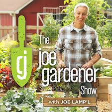 Joe Vs The Volcano Desk Lamp by The Five Biggest Mistakes Gardeners Make The Joe Gardener