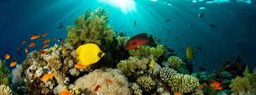 exposition à l aquarium de la porte dorée rscc section plongée