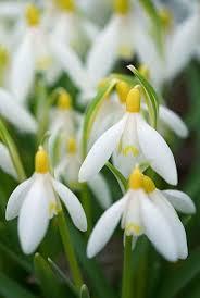8 best white flowers aesthetic images on white flowers