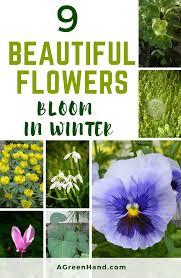 9 Beautiful Flowers That Bloom In Winter