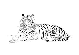 Coloriage Tigre Les Beaux Dessins De Animaux à Imprimer Et Colorier