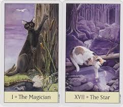 cats on deck cat s eye tarot card deck psychic