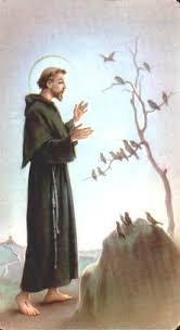 st francis of assisi saints catholic