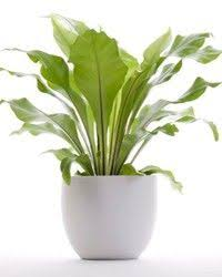 Best Plants For Bathroom No Light by Home Plants That Cleanse Air Within 6 Hours Beauty U0026 Health