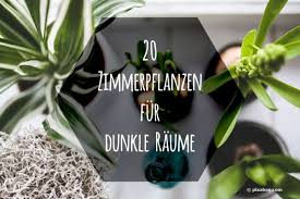 zimmerpflanzen für dunkle räume 20 schattenpflanzen