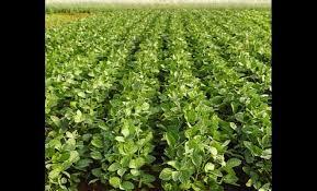 chambre d agriculture franche comté edition de besançon le soja à la mode de chez nous