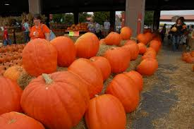 Jacksonville Nc Pumpkin Patch by Giant Pumpkins For Sale At The Raleigh Nc Farmers U0027 Market It U0027s