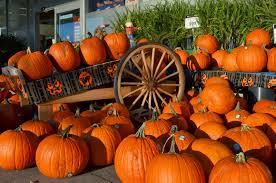 Keene Pumpkin Festival by 3 Interesting Festival Stories Of Pumpkin Brisk Post